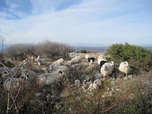 Wanderung Punat - Stara Baska